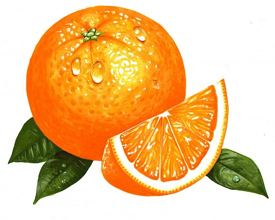 Orange Beauty - Foodillustrationen